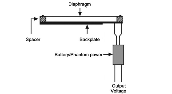 Cross-Section of Capacitor Microphone